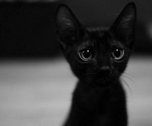 cat, black, and kitten image