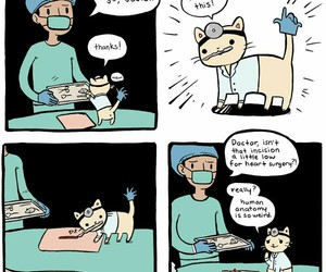 cat and doctor cat image