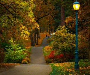 autumn, fall, and outdoors image