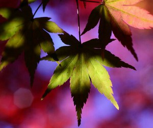 leaves, autumn, and background image