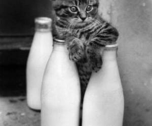 aww, cat, and milk image