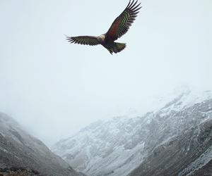 eagle and mountains image