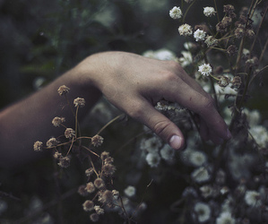flowers, hand, and touch image