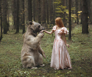bear, forest, and animal image