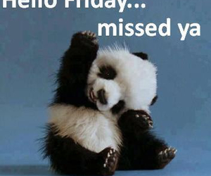 friday, pandas, and today image