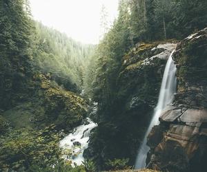beauty, greenery, and nature image