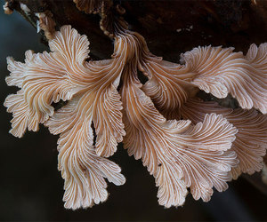 nature, fungus, and mushroom image