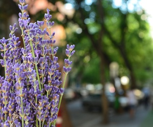 beauty, budapest, and flower image
