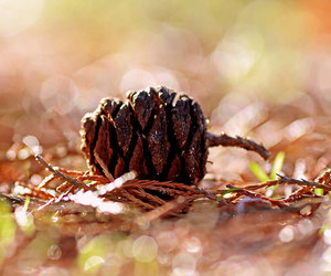 autumn, bokeh, and fall image