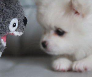 cute, totoro, and dog image