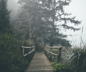 nature, bridge, and fog image