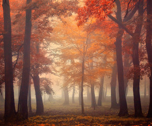 autumn, trees, and woods image