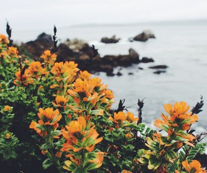 flowers, nature, and vintage image