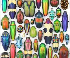bugs and beetles image
