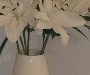 flowers, pretty, and white image