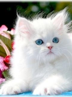 Download Cute Cat Wallpapers To Your Cell Phone Cute Cute Cat Sweet 16722813 Zedge