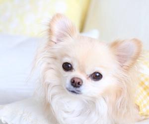 dog, adorable, and beautiful image