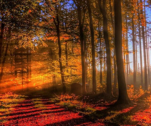 autumn, sun, and beautiful image