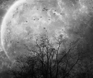 birds, moon, and black and white image