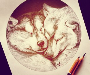 wolf and love image