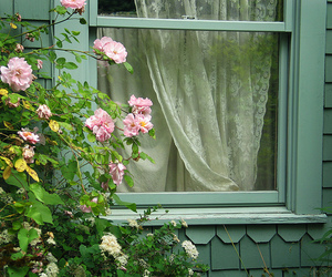 flowers, window, and plants image