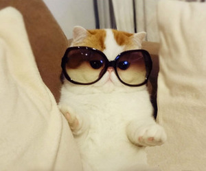 cat, cute, and sunglasses image