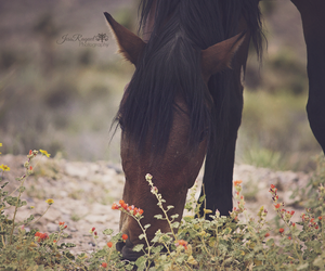 animal, beauty, and horse image
