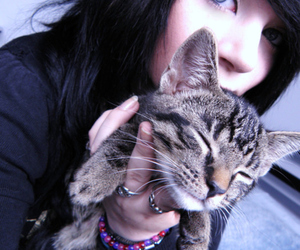 amber and cat image
