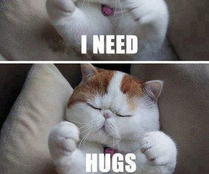 fluffy, hug, and kitten image
