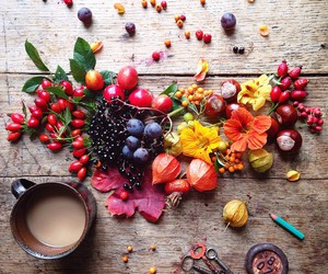 autumn, leaves, and berries image