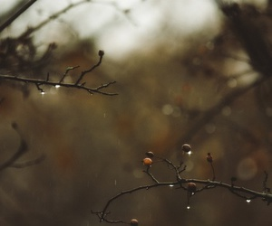 autumn, fall, and branches image