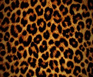 animal, leopard, and print image