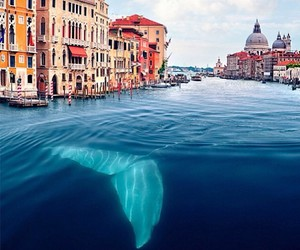 venice and whale image