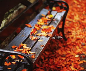autumn, leaves, and bench image