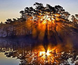 hdr, lake, and tree image