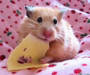 cheese, hamster, and cute image