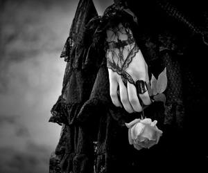 gothic, black, and rose image