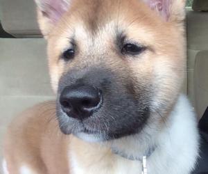 beautiful, dog, and kuma image