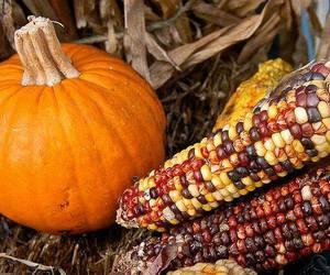 corn, autumn, and fall image