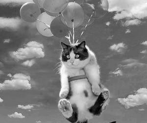 cat, balloons, and black and white image
