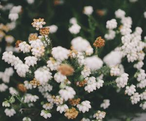 flowers, vintage, and indie image