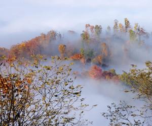 autumn, beautiful, and fog image