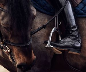 horse and equestrian image