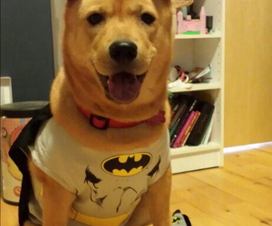 batman, cute, and puppy image