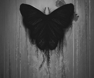 butterfly, black, and dark image