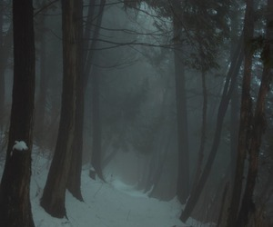 forest, snow, and winter image