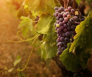 grapes, autumn, and fall image