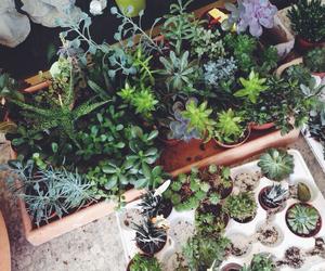 grunge, plants, and tumblr image
