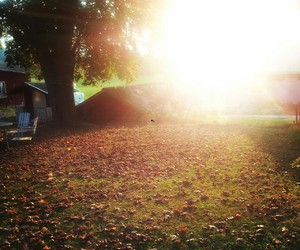 autumn, fall, and outdoor image