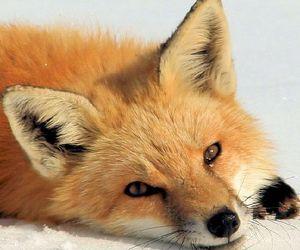 animal, beautiful, and cute image